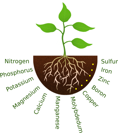plant roots – Greenleaf Nutrients